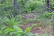 Kaivausalueet peitettynä kaivauksen jälkeen. Kasvillisuus uusiutuu nopeasti, eikä kaivausten jälkiä erotu vuoden-parin kuluttua.
